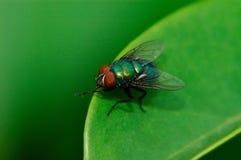 Eine Fliege auf dem Blatt Lizenzfreies Stockfoto