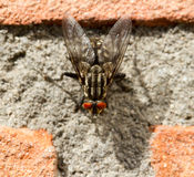 Eine Fliege auf einer Backsteinmauer Stockfoto