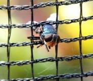 Eine Fliege, die auf einem Quadrat eingeschlossen wurde, sperrte Draht ein Lizenzfreies Stockfoto