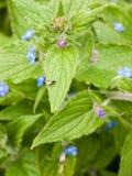 Eine Fliege, die am Rand eines großen grünen Blattes mit Beschaffenheit und d stillsteht Stockfotografie