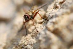 Eine Fliege haftet bewegungslos einer Felsen-Steigung an Stockfotografie