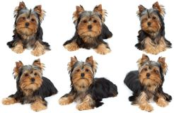 Eine Fotosession des Hundes Stockfotos