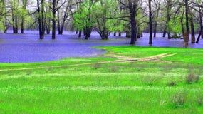 Eine Frühlingslandschaft. Die überschwemmten Bäume Stockbild