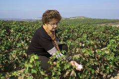 Eine Frau, die Baumwolqualität prüft Stockfoto