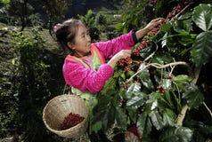 Eine Frau, die dem ethnischen Akha-Bergvolk gehört Stockfotografie