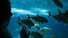 Eine Frau, die Fische unter dem Wasser durch das Glas betrachtet lizenzfreie stockfotografie