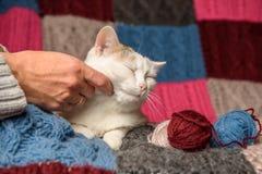 Eine Frau, die eine Katze streicht Stockfotografie