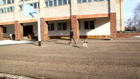 Eine Frau geht und spielt mit einem Hund stock video