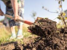 Eine Frau gräbt einen Garten mit einer Schaufel stockbilder