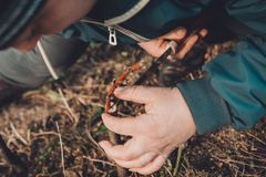 Eine Frau macht einen Obstbaum im Garten und befestigt einen jungen Zweig stockfotografie