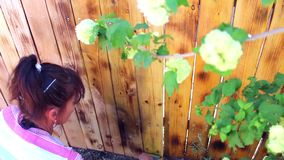 Eine Frau malt einen Zaun stock video