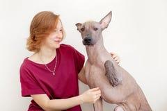 Eine Frau mit einem mexikanischen unbehaarten Hund stockbild