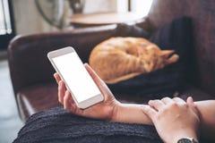 Eine Frau ` s Hand, die weißen Handy mit leerem Bildschirm und einer braunen Katze Schlafens im Hintergrund hält stockfotografie