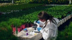 Eine Frau studiert Anlagen in einem Glashaus und arbeitet mit einem Mikroskop und einer Pipette stock footage