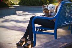 Eine Frau und ihre zwei Hunde. Stockfotografie
