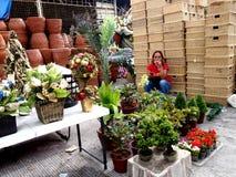 Eine Frau verkauft Zierpflanzen und Blumen, Weihnachtsdekors und Körbe in Dapitan-Markt Stockfoto