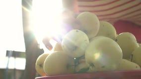 Eine Frauenhand, die einen roten reifen Apfel vom Apfelbaum auswählt stock video