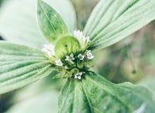 Eine frische Blume Stockfoto