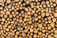 Eine Front auf Ansicht eines Stapels der frisch geschnittenen Bäume gestreift von den Niederlassungen und für das Sägemühlenteil  lizenzfreie stockfotos