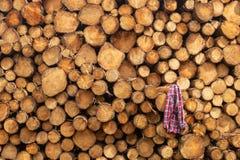Eine Front auf Ansicht eines Stapels der frisch geschnittenen Bäume gestreift von den Niederlassungen und für das Sägemühlenteil  lizenzfreies stockfoto