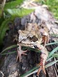 Eine Frosch-Haltung Stockbilder
