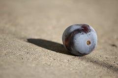 Eine Frucht der Pflaume Lizenzfreies Stockfoto