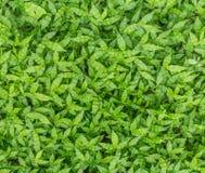 Eine Ganzseite Lushy-Glanz grünen Grases Stockfotos