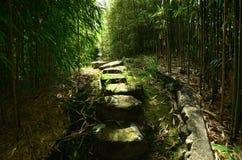 Eine Gasse durch die Bambuswaldung von Kyoto Japan Stockfoto
