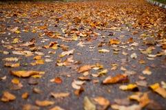 Eine Gasse voll von Blättern Stockbilder