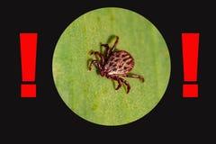 Eine gef?hrliche Parasit- und Infektionsf?rdermaschinenmilbe stockbild