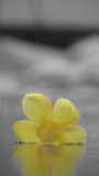 Eine gefallene Blume Stockbild