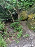 Eine geheime Spur in den Wald stockfoto
