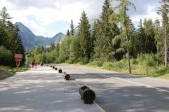 Eine gehende Bahn in der Nähe von See Strbske Pleso in der Summe Stockfotografie