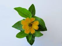 eine gelbe Blume Stockfotos