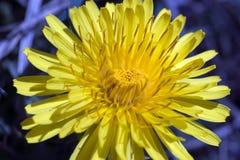 eine gelbe Blume Stockfoto