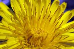 eine gelbe Blume Stockbild