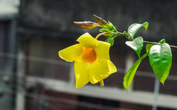 Eine gelbe Blume in voller Blüte Stockbilder