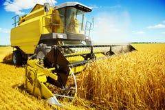 Eine gelbe Erntemaschine in der Arbeit Stockfotografie
