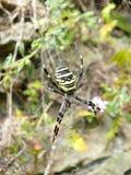 Eine gelbe Spinne Stockbilder