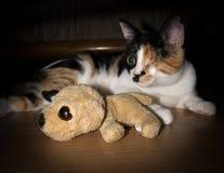 Eine gemusterte Katze mit Spielspielzeug. Stockbild