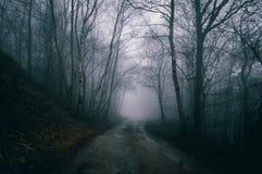 Eine gespenstische Bahn durch einen nebeligen Wald im Winter lizenzfreie stockfotos