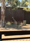 Eine Giraffe Stockbild