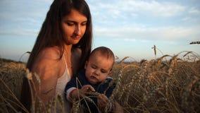 Eine glückliche junge Mutter und ihr Sohn sitzen auf einem Weizengebiet Das Baby, das neugierig Ohren des Weizens betrachtet stock video footage