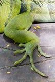 Eine grüne Eidechse stockfoto