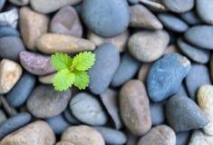 Eine grüne einsame Anlage durch die Steine Lizenzfreies Stockfoto