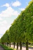 Eine grüne Hecke gegen den blauen Himmel lizenzfreie stockbilder