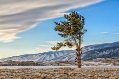 Eine grüne Kiefer und Kiesel mit Wolken nähern sich See Baikal und Berg Stockbilder