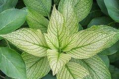 Eine grüne Niederlassung einer Gartenpflanze Stockbilder