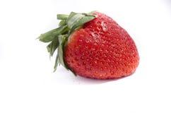 Eine grüne oberste große rote Erdbeere mit Samenvertretung Lizenzfreie Stockbilder