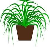 Eine grüne Topfpflanze für Dekoration Lizenzfreie Stockfotos